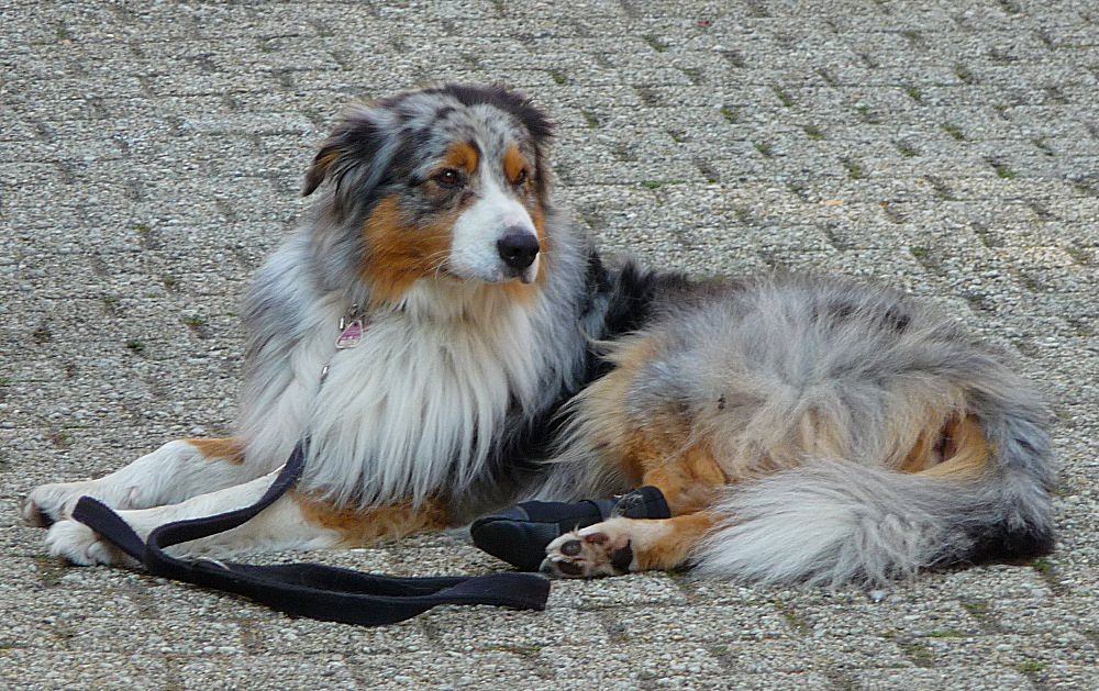Den berühmten bunten Hund aus dem Sprichwort gefunden ...