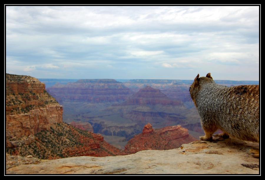 den besten Ausblick auf den Grand Canyon...