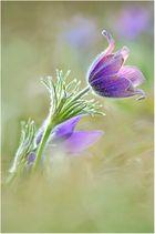 Den Frühling begrüßen ....