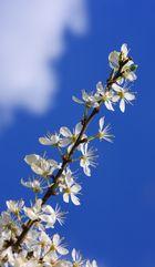 den Frühling riechen