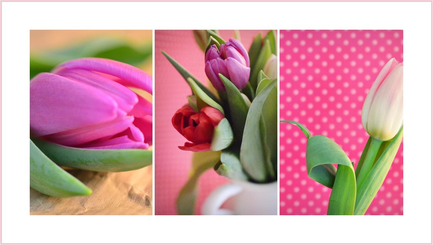 Den Frühlings ins Haus geholt