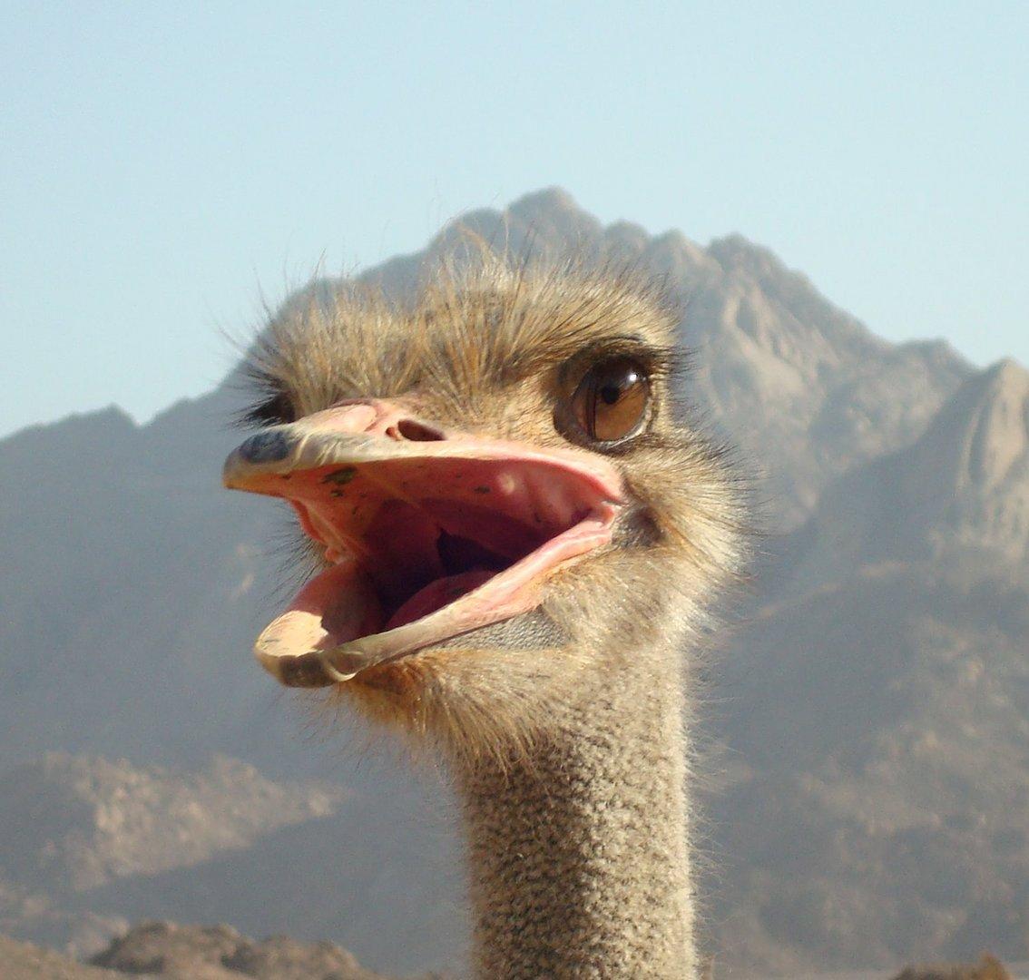 Den haben wir in der Wüste von Ägypten getroffen :-)