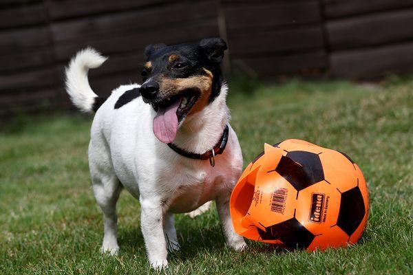 Den hätten wir erledigt, ich will sofort einen neuen Ball