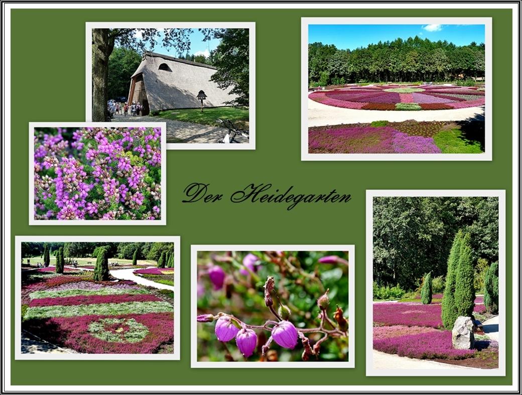 Den Heidegarten . . .