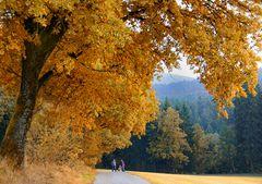 den Herbst...