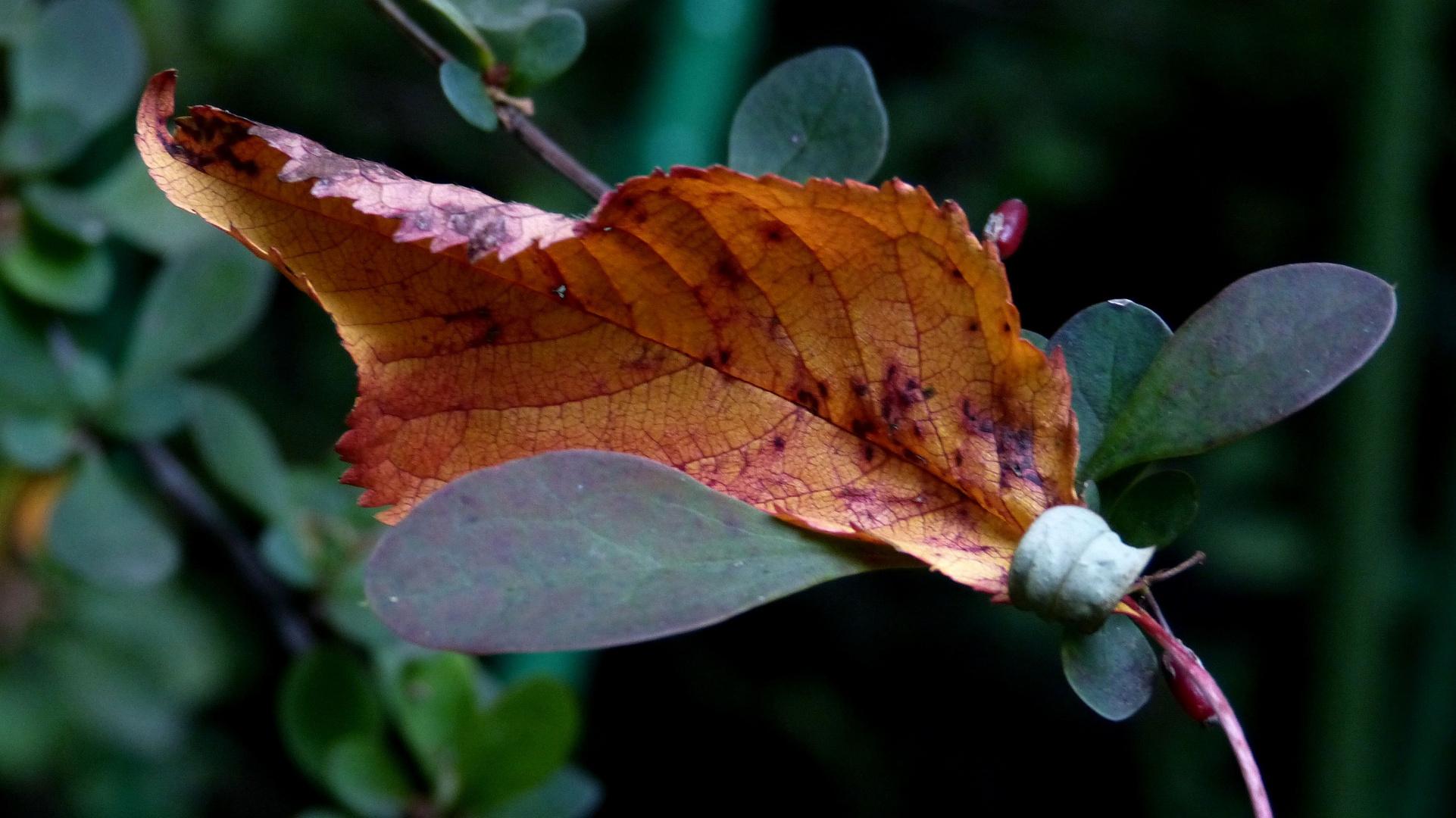 den Herbst abfangen