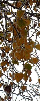 den Herbst eingefroren
