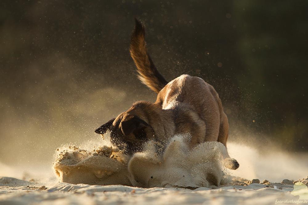 Den Kopp in den Sand stecken...