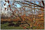 Den letzten Herbsttag