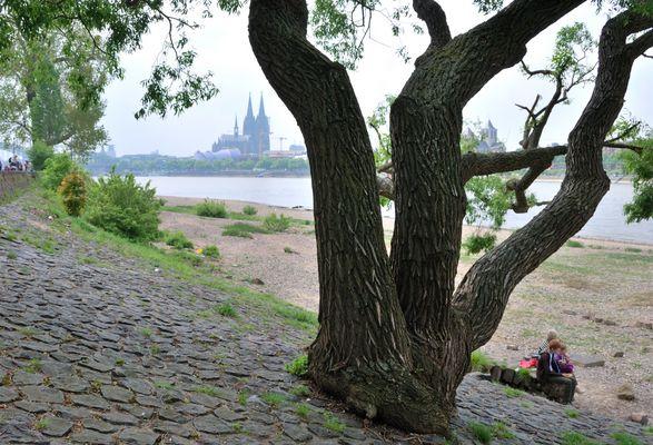 Den Rhein, die Kölnische Kathedrale, der Frühling.