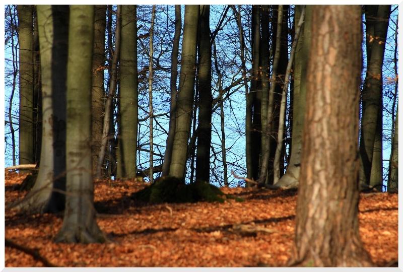 Den Wald voller Bäume sehen...