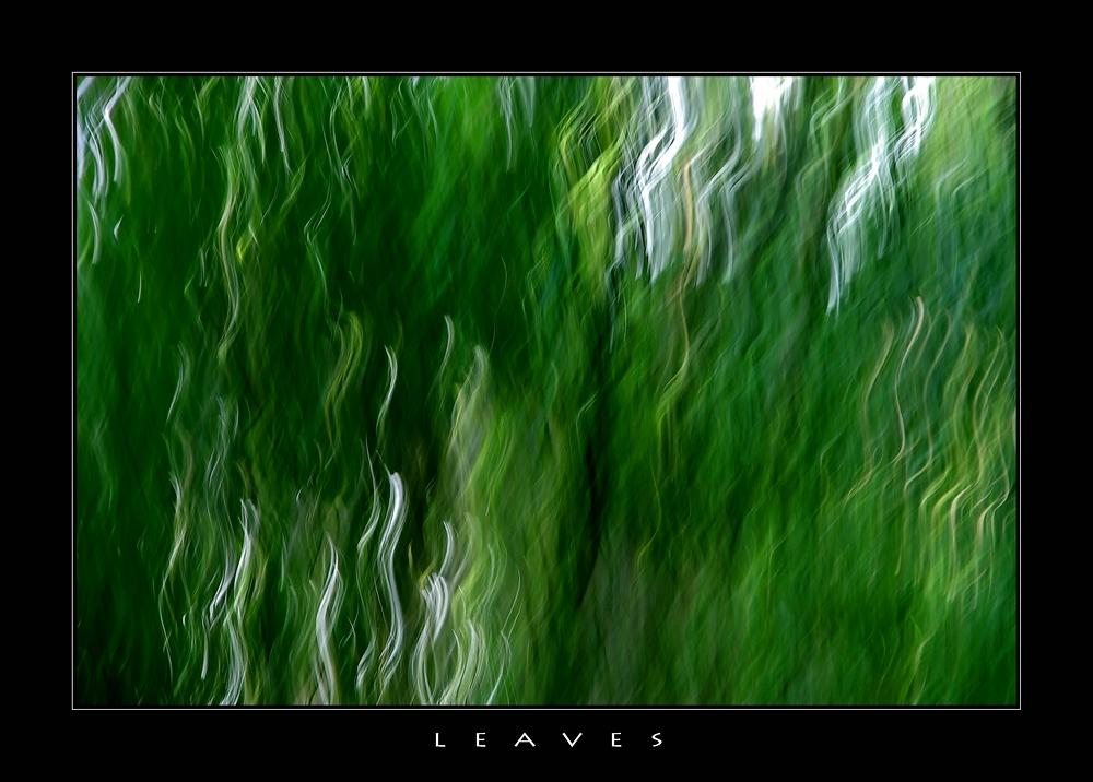 ...den Wald vor lauter Bäumen nicht...