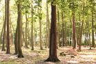 Den Wald vor lauter Bäumen sehen.