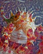 Dendronephtya Crab