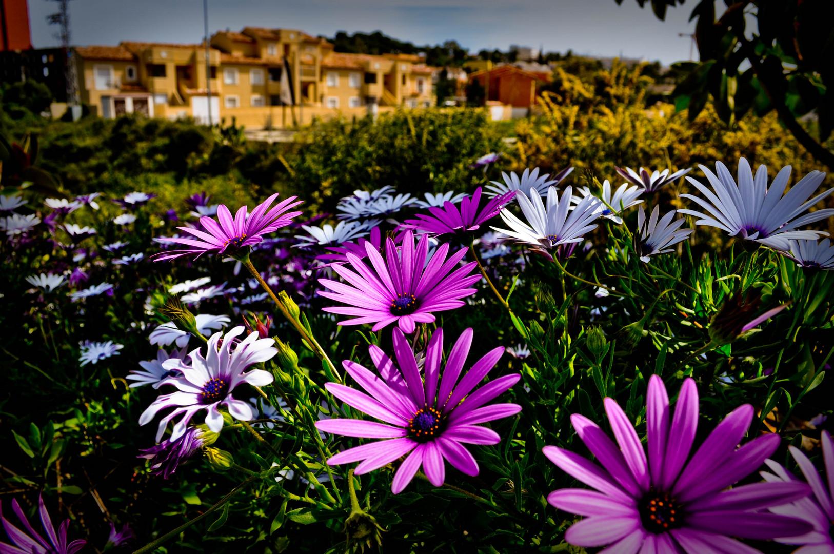 Dénia - Flores