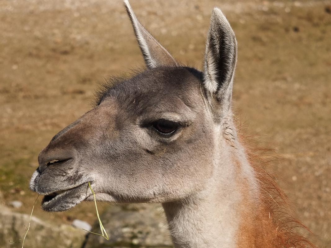 Denn ersten schönen Tag genutzt und ab in den Dortmunder Zoo.
