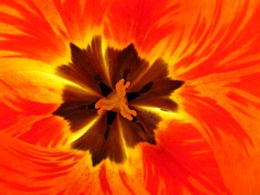 Dentro il fiore