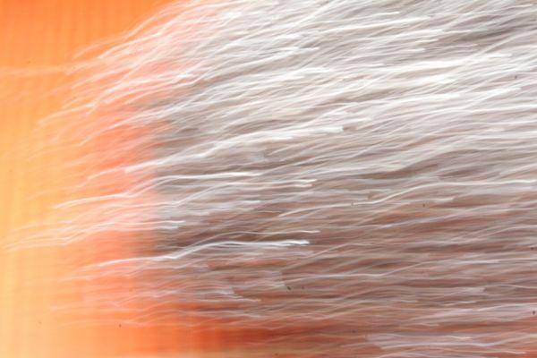 Départ de course de spermatozoïdes