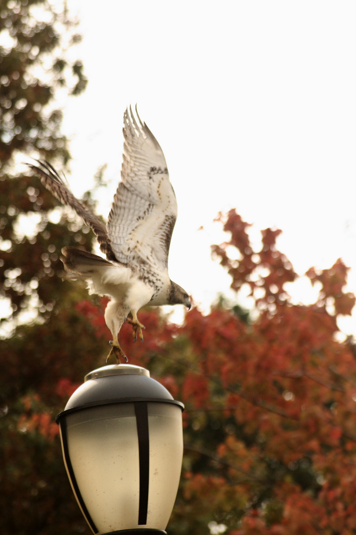 departing eagle