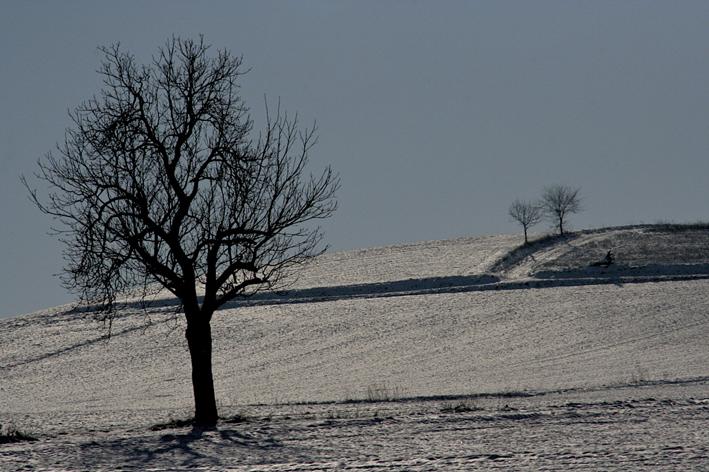 Déplumés, l'hiver venu