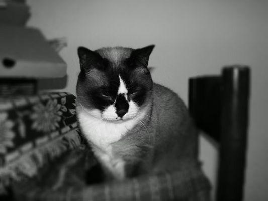 Deprimierte Katze