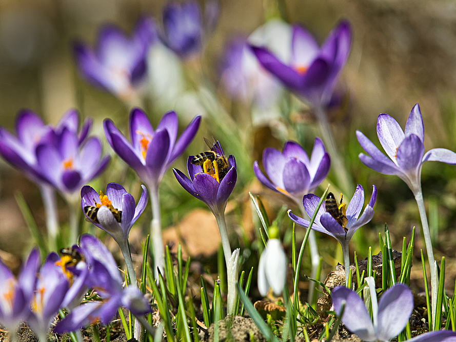 Der 1. Frühlingsgruß