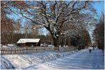 Der 1. Schnee... (Winterimpressionen 2)