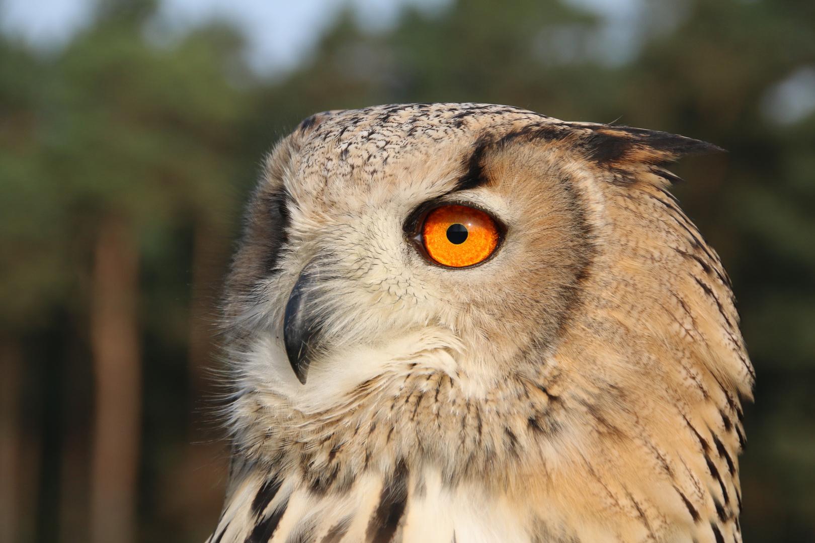 der 2. Augen - Blick