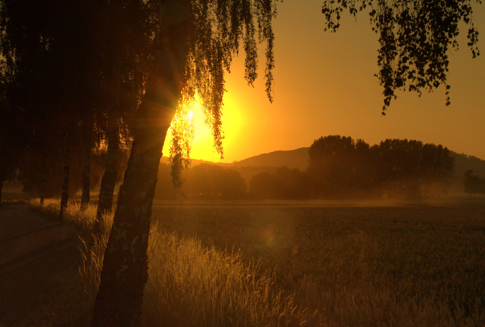 ...der Abendsonne entgegen...: ...die Romantik der Landstraße...