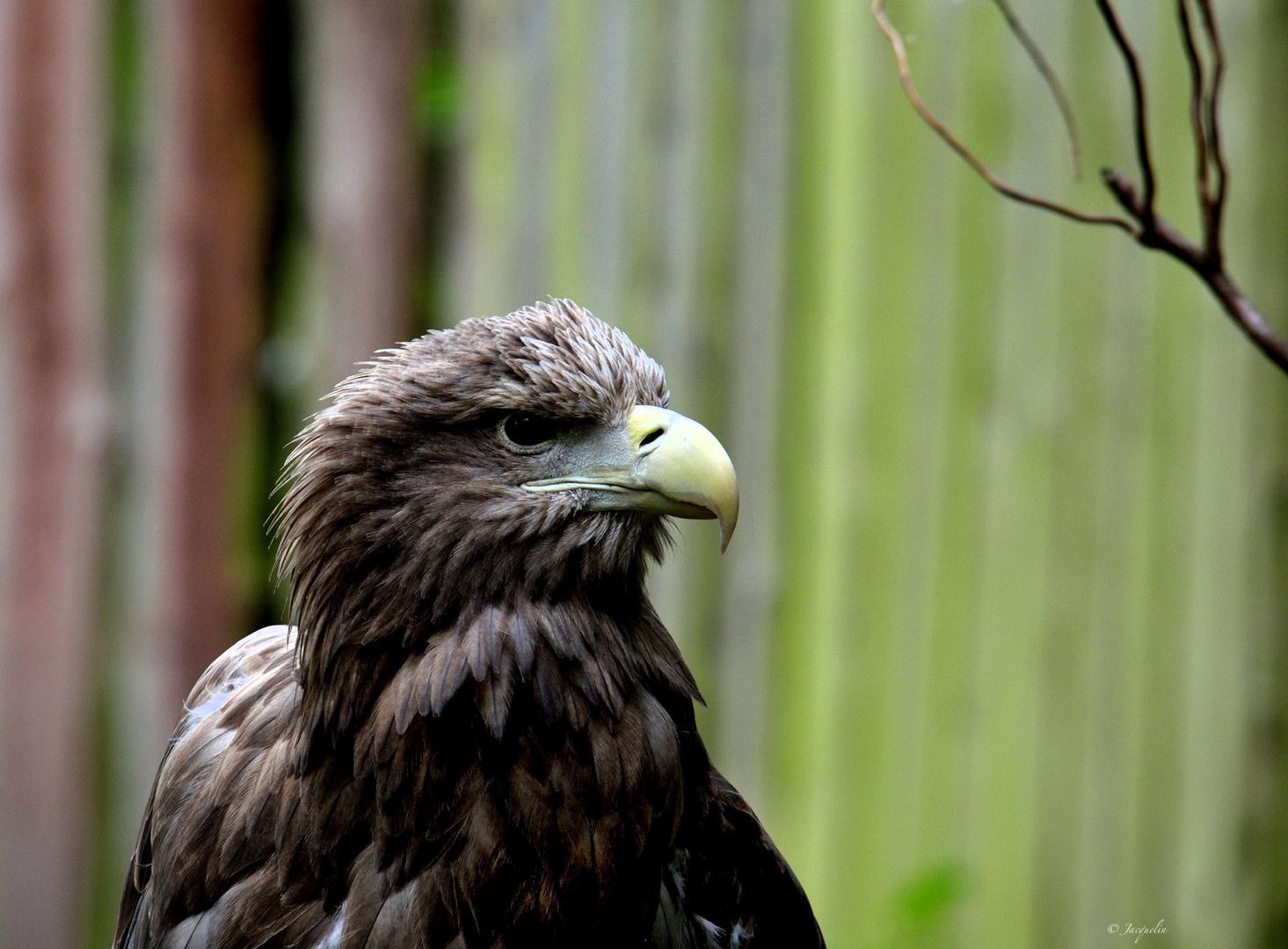 Der Adler !!