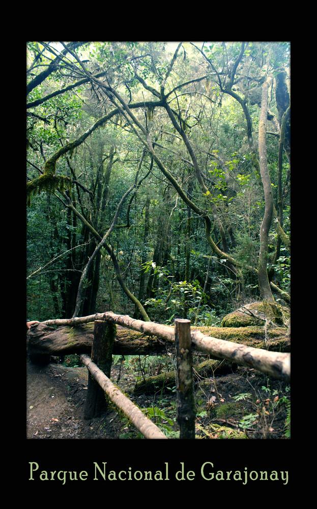 Der älteste Regenwald der Welt