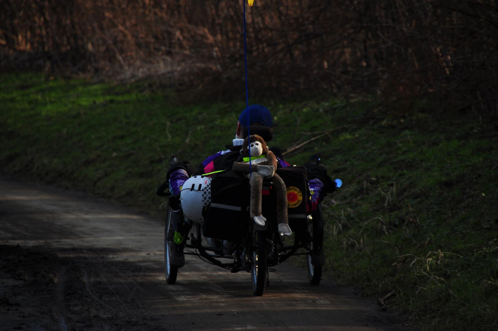 der Affe auf dem Fahrrad