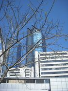 der allein stehender Baum