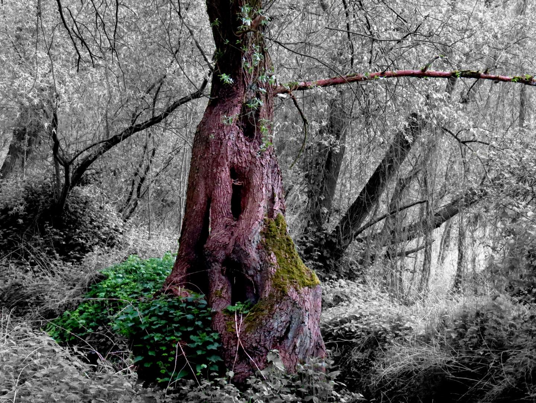 Der alte Baum 2
