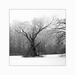 [ Der alte Baum ]