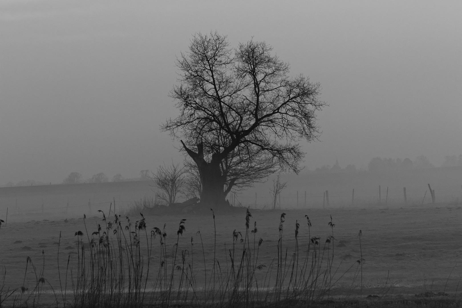 Der alte Baum ....