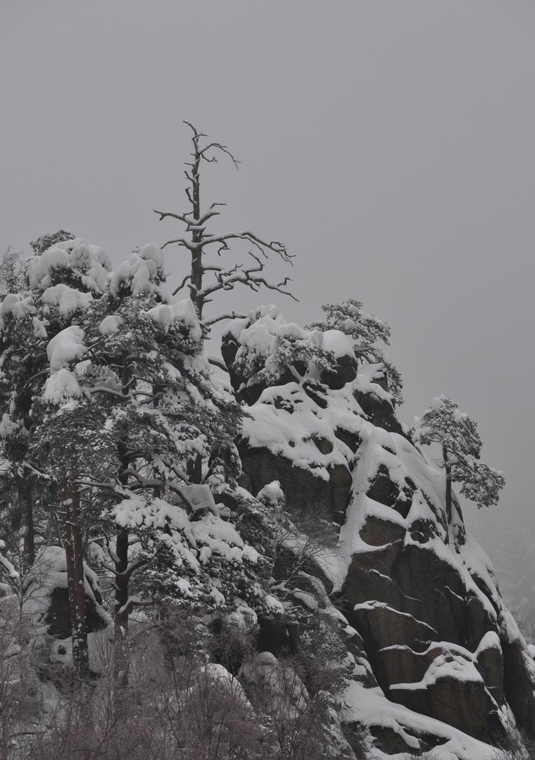 Der alte Baum am Kletterfelsen