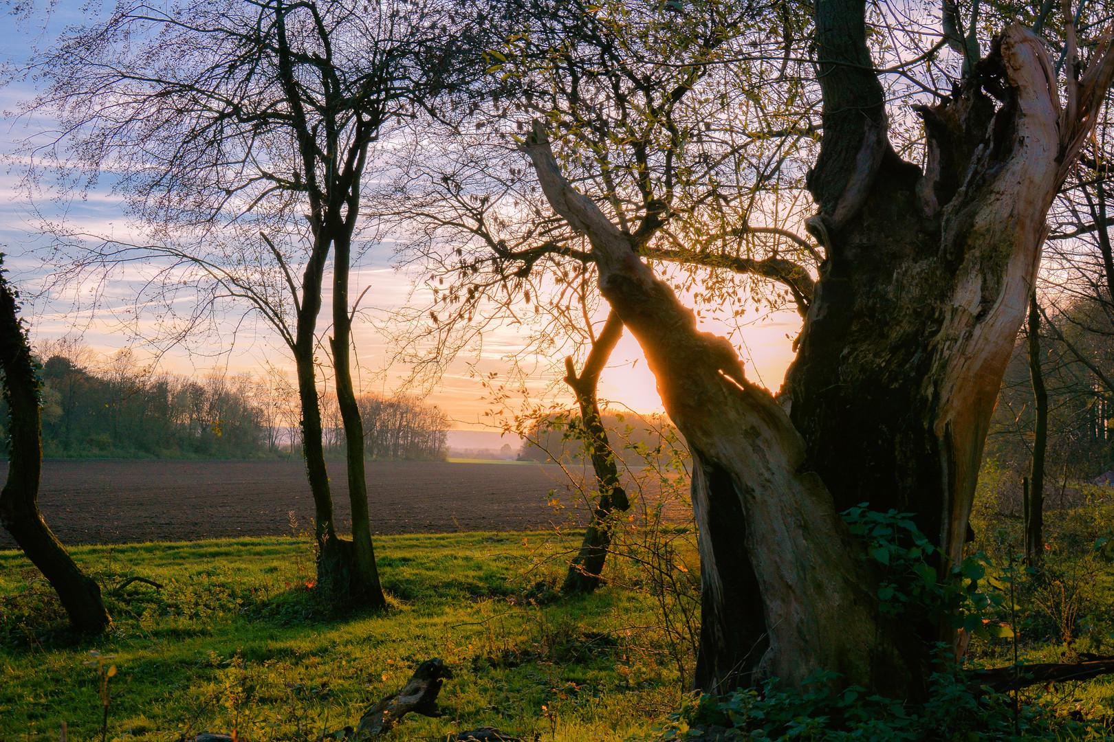 der alte Baum genießt die Sonne