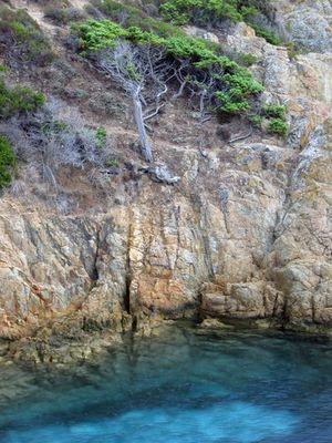 der alte Baum und das Meer