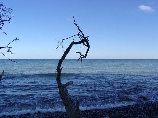 Der alte Baum und das Meer...