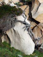 Der alte Baum und der Stein