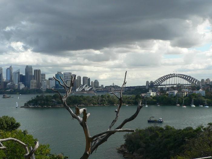 Der alte Baum und die Stadt