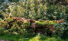 - Der alte Baumstamm voller Pilze-
