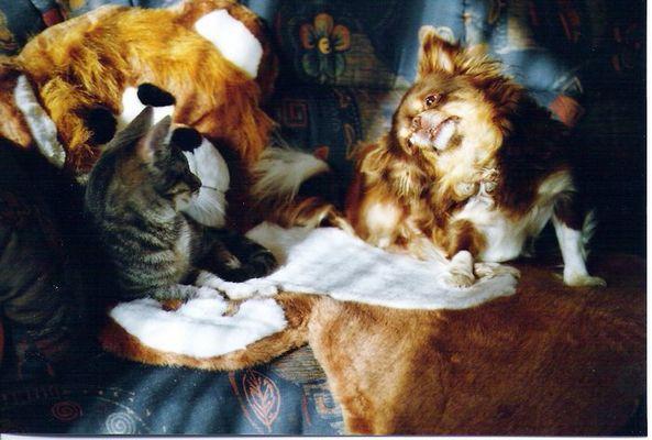 der alte Chawabonga und die neue Katze Silva