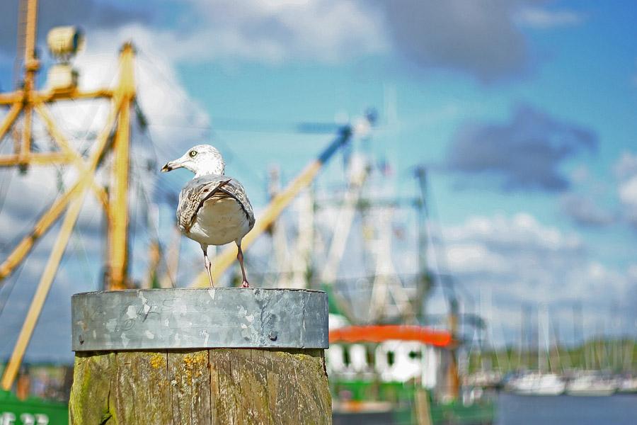 Der alte Hafenwärter
