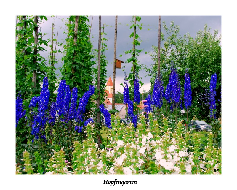 Der alte Hopfengarten