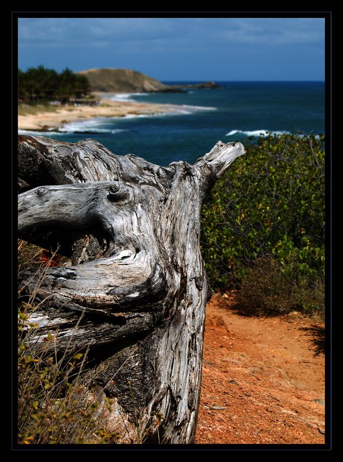 Der alte Mann (Baum) und das Meer