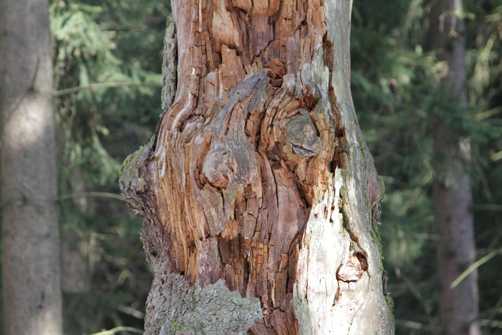 der alte Mann im Baum