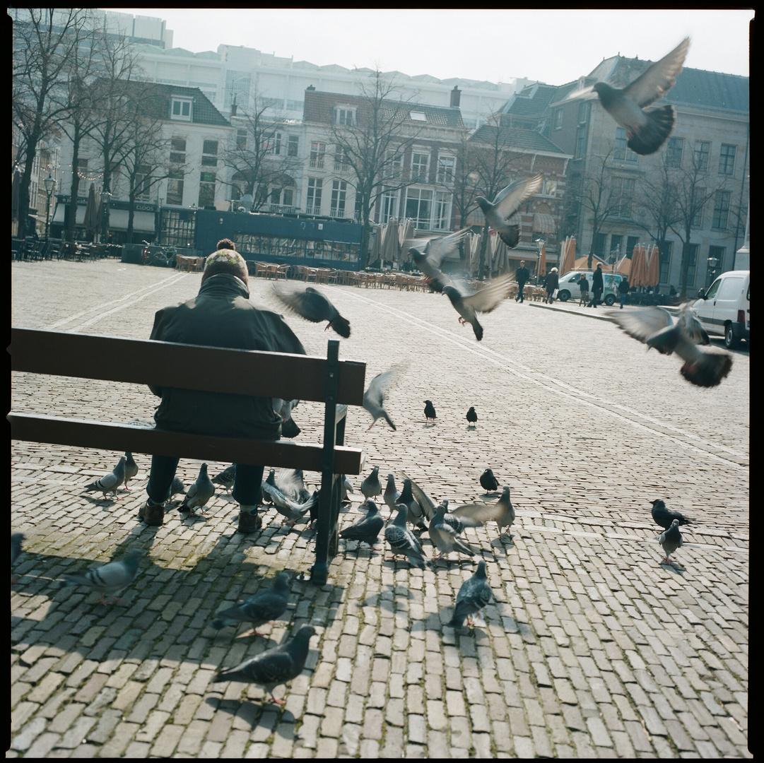 Der alte Mann und die Tauben