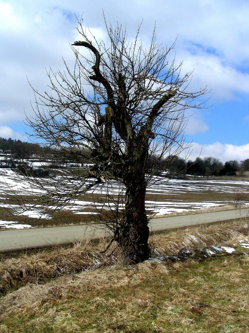 Der Alte von der Dorfwiese